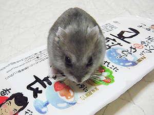 カノンちゃんとお豆腐