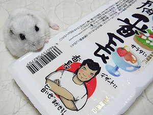 シオンちゃんとお豆腐