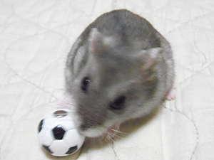 サッカーカノンちゃん