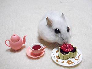 シオンちゃんお誕生日