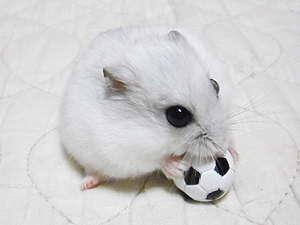 サッカーシオンちゃん