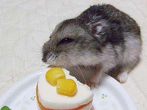 マロンちゃん&ケーキ