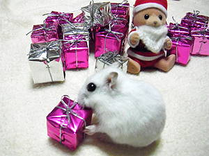 クリスマスシオンちゃん