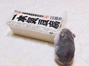 レオンちゃん&お豆腐
