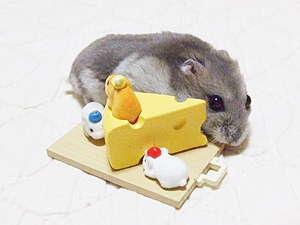 レオンちゃんとチーズ