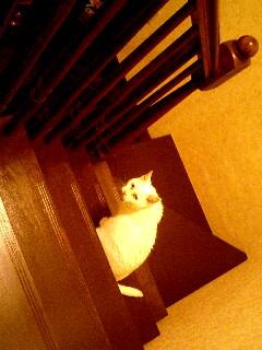 階段姫.jpg