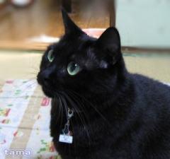 黒猫あくび嬢