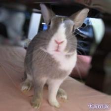 ウサギのわかさん