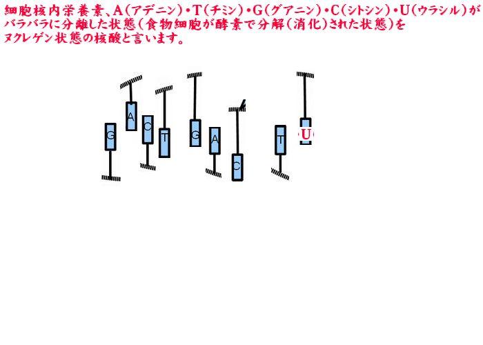 ヌクレゲン核酸:図解
