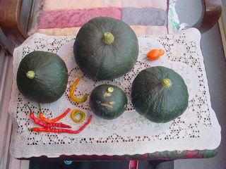 家庭菜園:収穫:南瓜