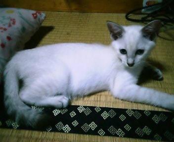 子猫アクア~☆