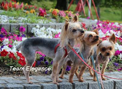 Team Elegance