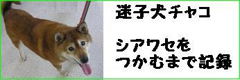 迷い犬チャコ
