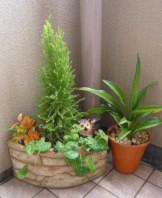 排水溝隠しの為の鉢植えもちょっとだけ秋