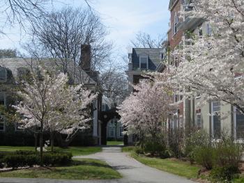 HBS Sakura 2008-04