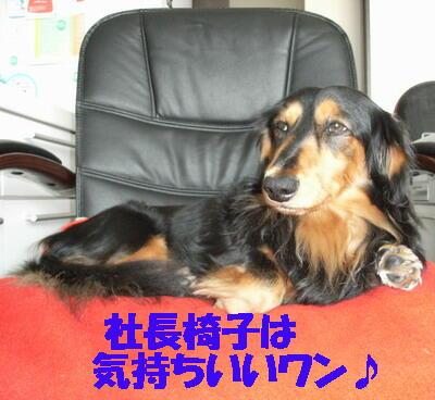 07/04/20社長椅子でくつろぐミッキー