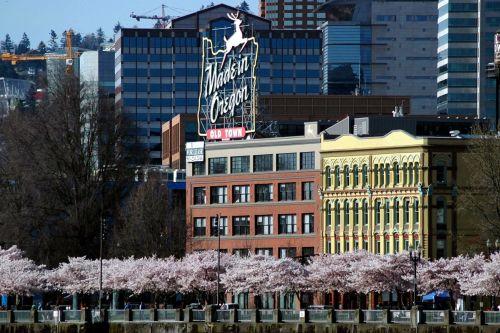 オレゴン桜2009