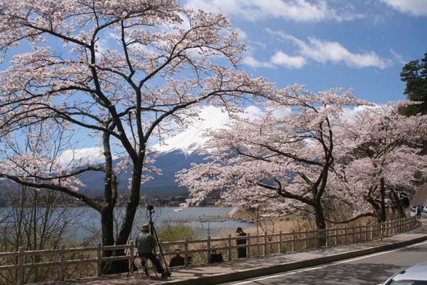 060421富士山と桜 036.jpg
