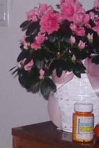 退院の時の花