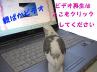 ビデオ再生.png