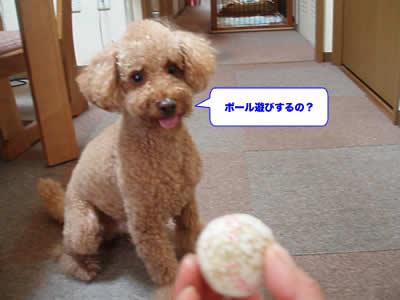 20070816_3.jpg