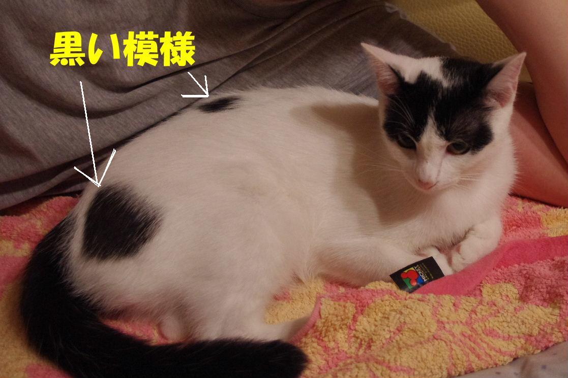 2010_0630子猫0004.JPG