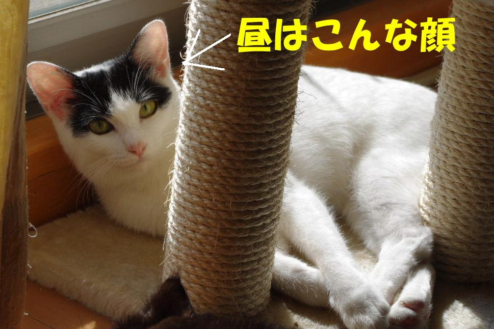 2010_0827sizuku0005.JPG