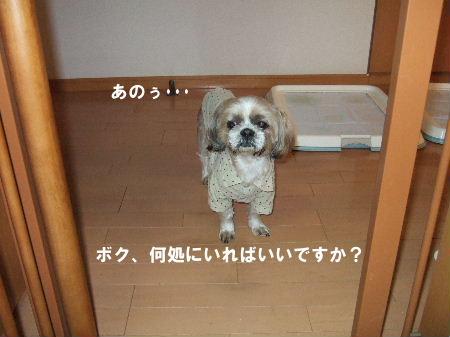 2007_0118ロッキー0008.JPG