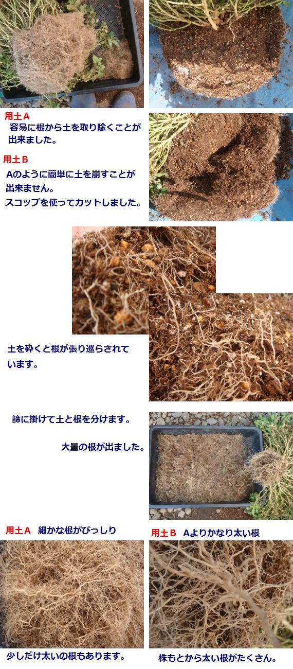 根の様子 2