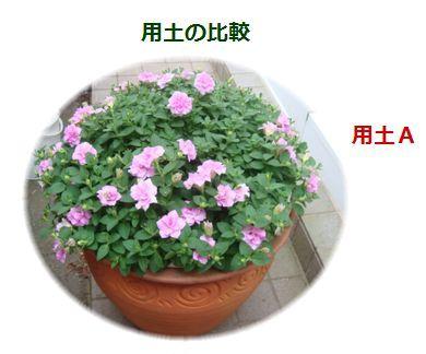 用土Aに植えたお花