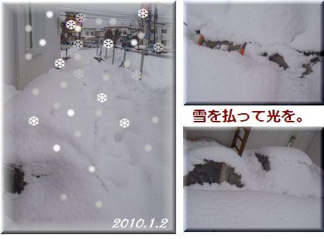 雪に埋もれたビオラトンネル