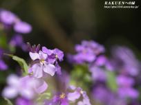 flower119_1024.jpg