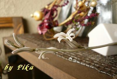 ハオルチアのお花.JPG