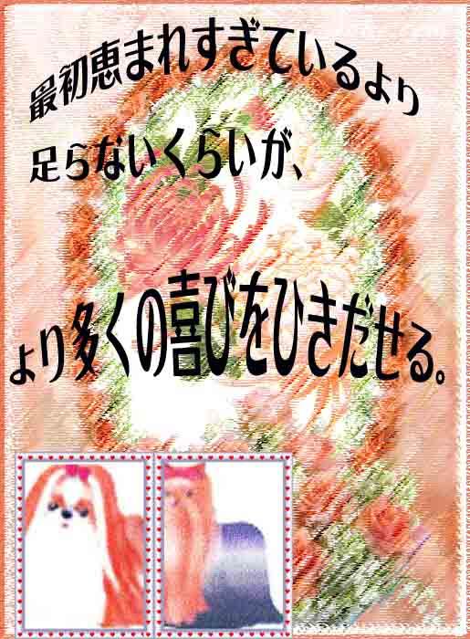 蘭菊.jpg