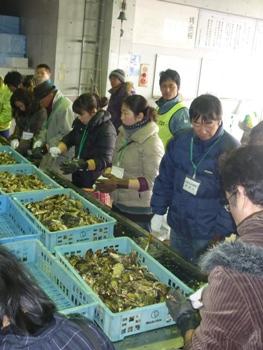 牡蠣ムキ体験