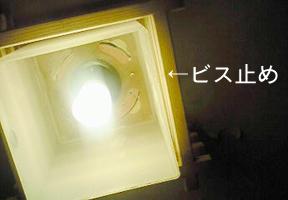 tanuki-7.jpg