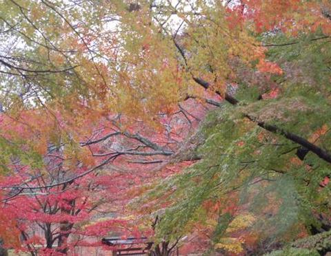 滋賀2008 11.24 130.jpg