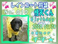 rain010.jpg