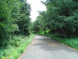 2007_0913尾根緑道.JPG