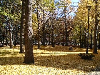 2007_1205黄色いジュウタン.JPG