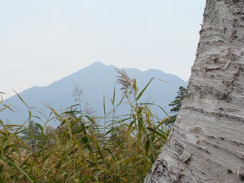 尾瀬・至仏山