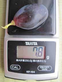 9.29葡萄ウインク粒.jpg