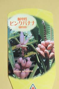 5.23桃色バナナ2.jpg