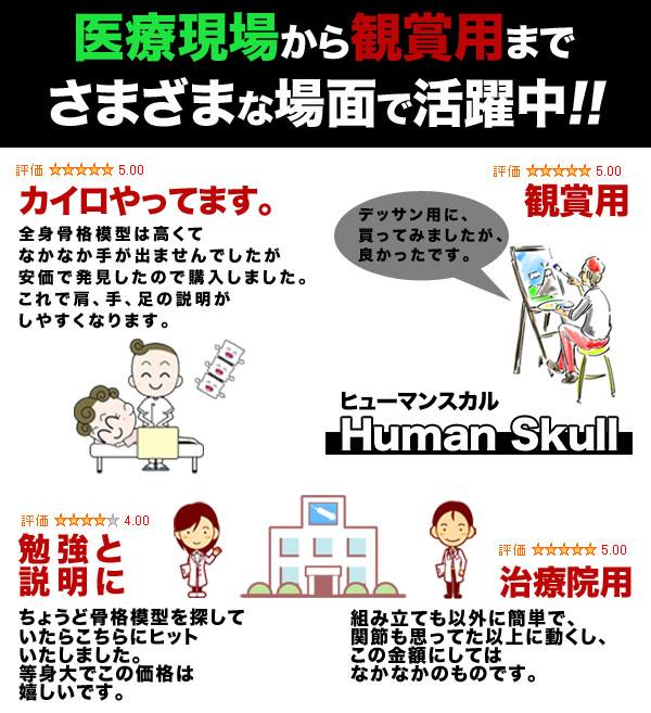 hyuman_skull.jpg