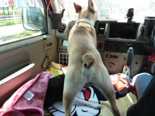 カール車中で