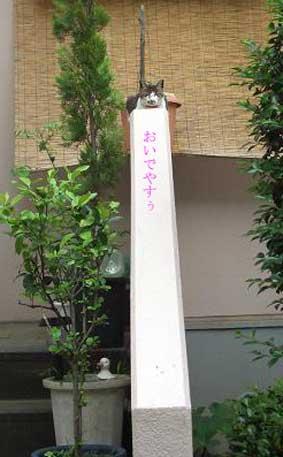 '11.8.24日記5