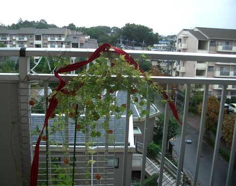 09・10・9台風とカズラ2