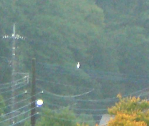 07・11・10まるお白鷺