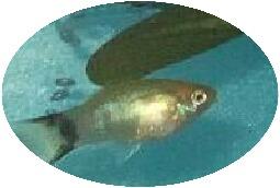 熱帯魚 a.jpg