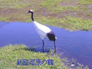 釧路湿原の鶴